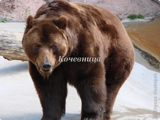 Весна в Московском зоопарке фото 12