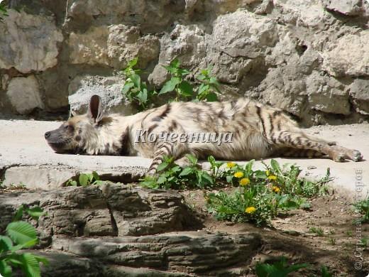 Весна в Московском зоопарке фото 13