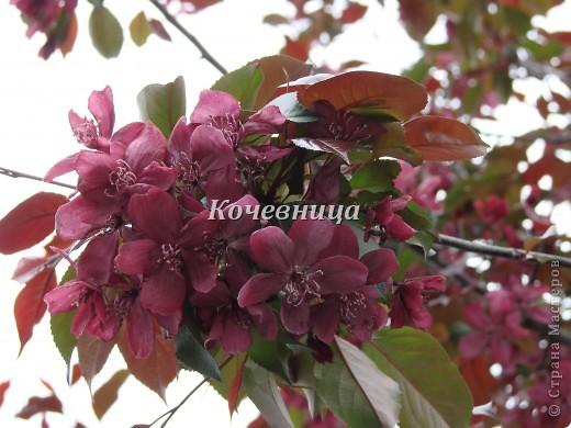 Весна в Московском зоопарке фото 17