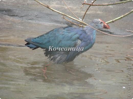 Весна в Московском зоопарке фото 18