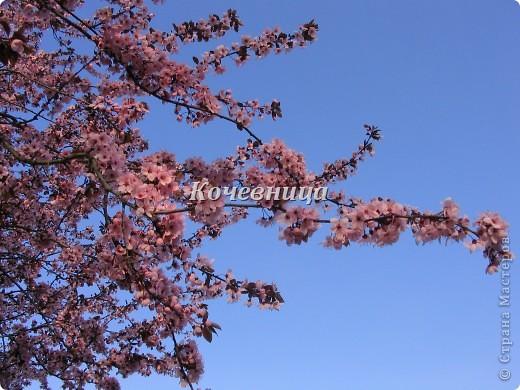 Весна в Великобритании фото 5