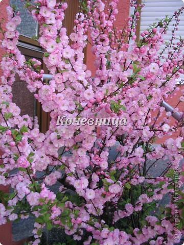 Весна в Великобритании фото 6