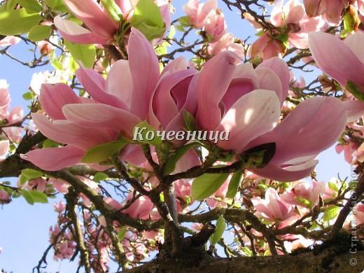 Весна в Великобритании фото 9