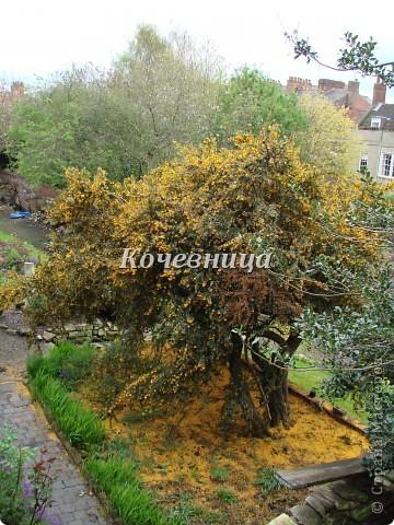 Весна в Великобритании фото 2