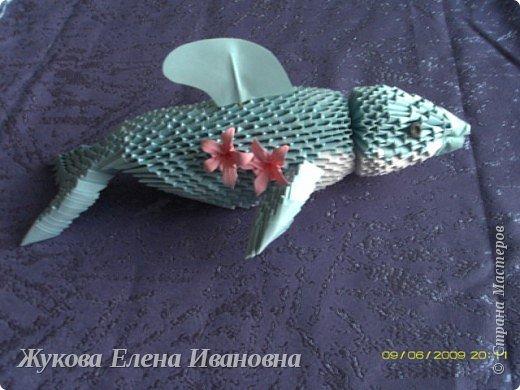 дельфин фото 1