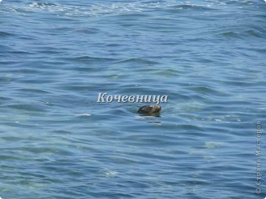 На о.Исабелла (самый большой остров архипелага, по форме напоминающий морского конька) мы шли на катере в сопровождении дельфинов ( часов 6 или 7 – точно не помню), на причале нас  встретили «пограничники» и обыскали рюкзаки на предмет ввоза флоры и фауны с другого острова.  На каждом острове своя растительность и свои жители, и дабы сохранить равновесие, пришлось властям ввести такие меры предосторожности.   фото 9
