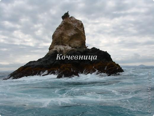 Морская игуана (кожаные губки) фото 7