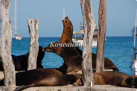 Морская игуана (кожаные губки) фото 19
