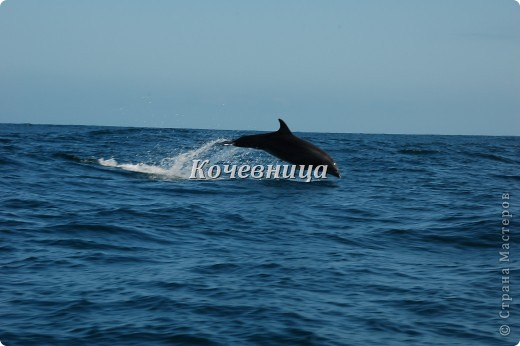 На о.Исабелла (самый большой остров архипелага, по форме напоминающий морского конька) мы шли на катере в сопровождении дельфинов ( часов 6 или 7 – точно не помню), на причале нас  встретили «пограничники» и обыскали рюкзаки на предмет ввоза флоры и фауны с другого острова.  На каждом острове своя растительность и свои жители, и дабы сохранить равновесие, пришлось властям ввести такие меры предосторожности.   фото 2