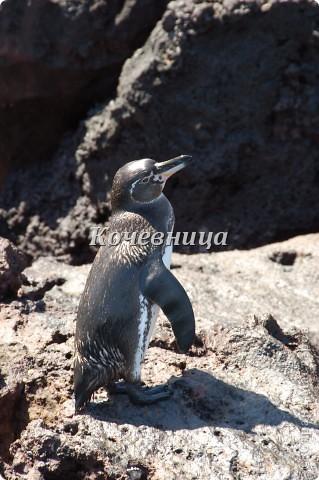 Морская игуана (кожаные губки) фото 22