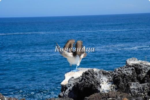 Морская игуана (кожаные губки) фото 14