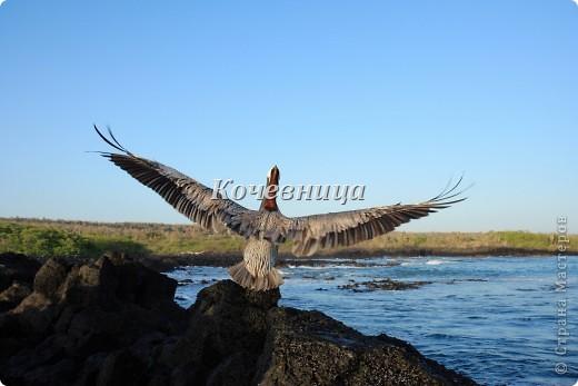 Морская игуана (кожаные губки) фото 16