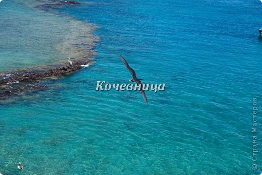 Морская игуана (кожаные губки) фото 17