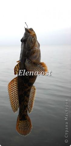 Это Каховское водохранилище - рукотворное море. С утра на берегу усаживаются рыбаки. Сегодня ловим бычка. При копировании статьи, целиком или частично, пожалуйста, указывайте активную ссылку на источник! http://stranamasterov.ru/user/9321 http://stranamasterov.ru/node/24791 фото 8