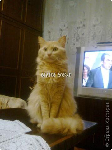 кошки фото 10