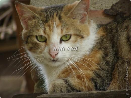 кошки фото 9