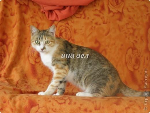 кошки фото 4