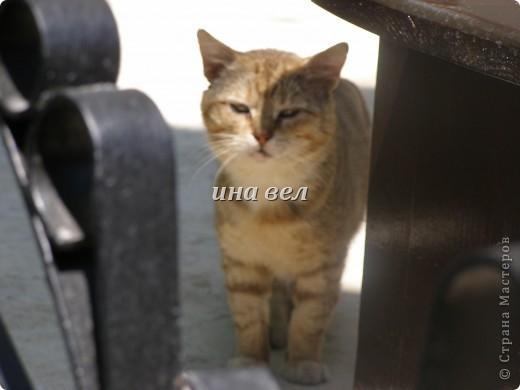 кошки фото 1