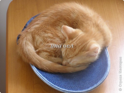 кошки фото 5