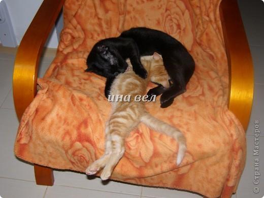 кошки фото 6