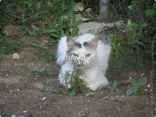 кошки фото 7