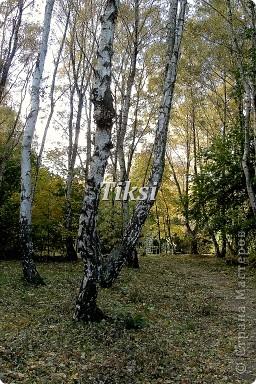 Очень люблю осень,именно вот эту,золотую ее пору....Это Подмосковье.Октябрь. Лес, точно терем расписной, Лиловый, золотой, багряный, Веселой, пестрою стеной Стоит над светлою поляной....И.Бунин. фото 17