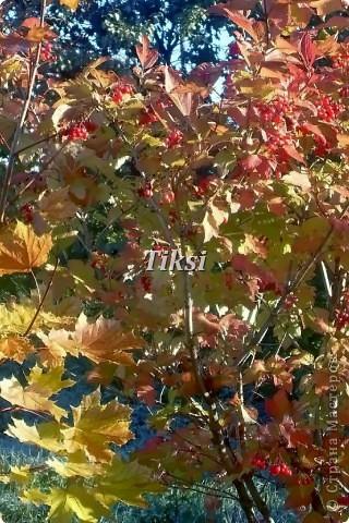 Очень люблю осень,именно вот эту,золотую ее пору....Это Подмосковье.Октябрь. Лес, точно терем расписной, Лиловый, золотой, багряный, Веселой, пестрою стеной Стоит над светлою поляной....И.Бунин. фото 2