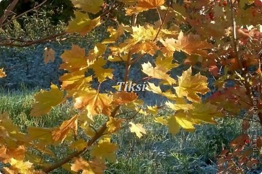 Очень люблю осень,именно вот эту,золотую ее пору....Это Подмосковье.Октябрь. Лес, точно терем расписной, Лиловый, золотой, багряный, Веселой, пестрою стеной Стоит над светлою поляной....И.Бунин. фото 1