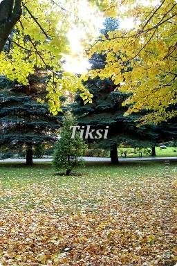 Очень люблю осень,именно вот эту,золотую ее пору....Это Подмосковье.Октябрь. Лес, точно терем расписной, Лиловый, золотой, багряный, Веселой, пестрою стеной Стоит над светлою поляной....И.Бунин. фото 11