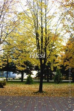 Очень люблю осень,именно вот эту,золотую ее пору....Это Подмосковье.Октябрь. Лес, точно терем расписной, Лиловый, золотой, багряный, Веселой, пестрою стеной Стоит над светлою поляной....И.Бунин. фото 14