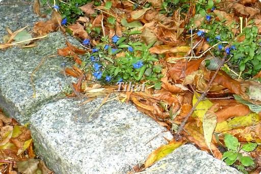 Очень люблю осень,именно вот эту,золотую ее пору....Это Подмосковье.Октябрь. Лес, точно терем расписной, Лиловый, золотой, багряный, Веселой, пестрою стеной Стоит над светлою поляной....И.Бунин. фото 24