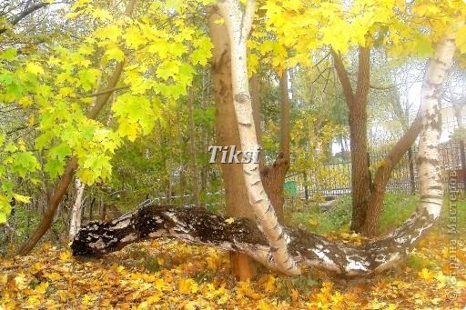 Очень люблю осень,именно вот эту,золотую ее пору....Это Подмосковье.Октябрь. Лес, точно терем расписной, Лиловый, золотой, багряный, Веселой, пестрою стеной Стоит над светлою поляной....И.Бунин. фото 22