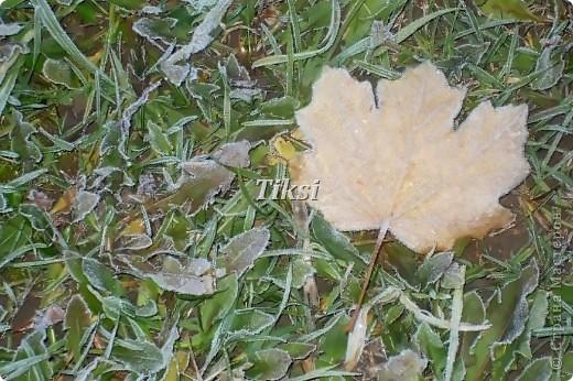 Очень люблю осень,именно вот эту,золотую ее пору....Это Подмосковье.Октябрь. Лес, точно терем расписной, Лиловый, золотой, багряный, Веселой, пестрою стеной Стоит над светлою поляной....И.Бунин. фото 4