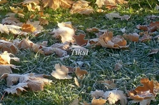 Очень люблю осень,именно вот эту,золотую ее пору....Это Подмосковье.Октябрь. Лес, точно терем расписной, Лиловый, золотой, багряный, Веселой, пестрою стеной Стоит над светлою поляной....И.Бунин. фото 5