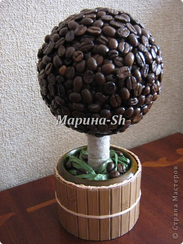 Моё кофейное дерево фото 1