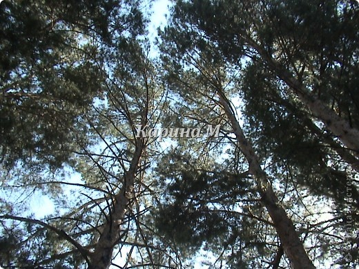 Рафайлово Исетский район Тюменская область фото 13