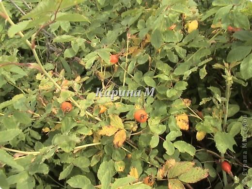 Рафайлово Исетский район Тюменская область фото 9