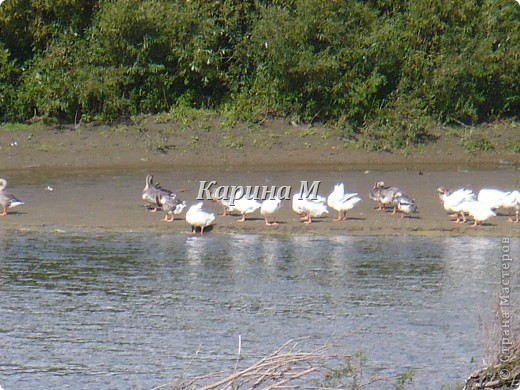 Рафайлово Исетский район Тюменская область фото 17