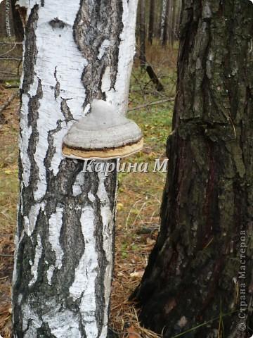 Рафайлово Исетский район Тюменская область фото 18