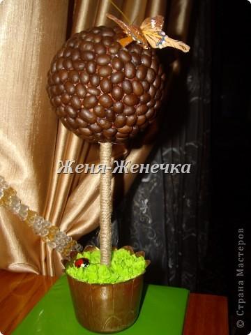 Кофейное деревце!!! фото 1