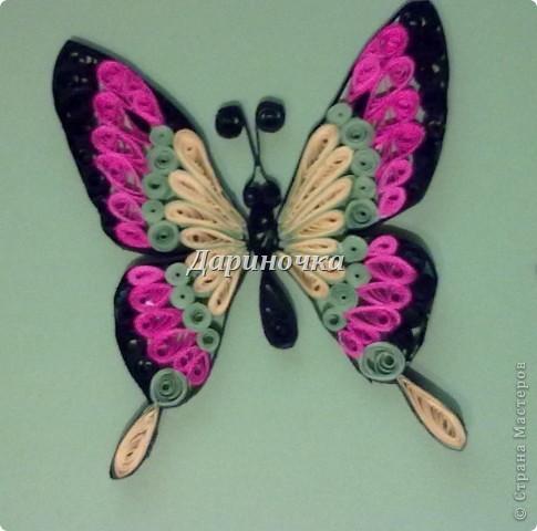 Бабочка  - 2 фото 1