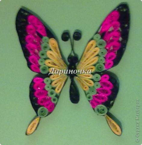 Бабочка  - 2 фото 2