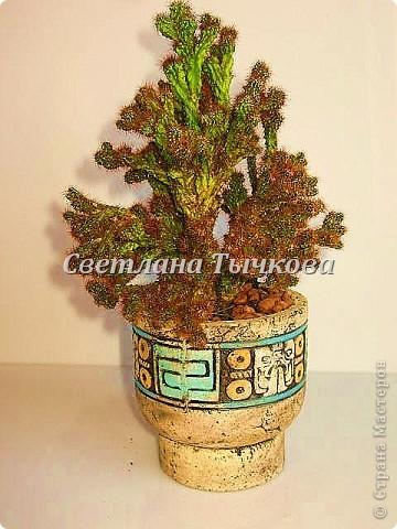 Цереус скалистый(кактусовые) фото 1