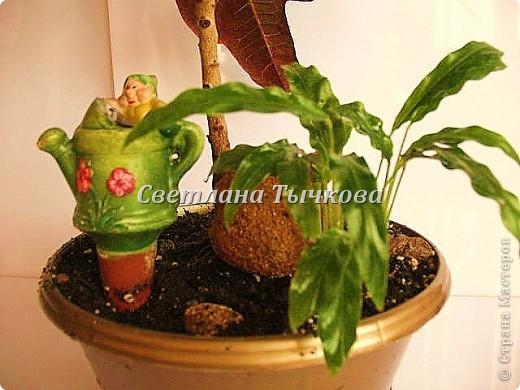 Цереус скалистый(кактусовые) фото 10