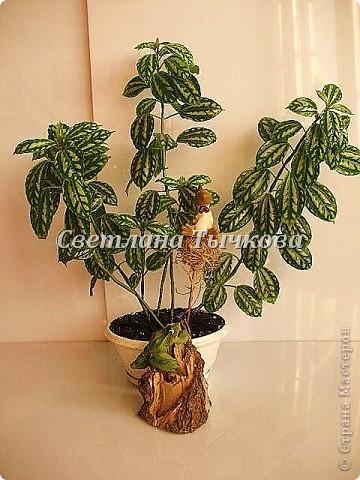 Цереус скалистый(кактусовые) фото 11