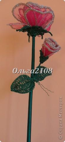 роза с бутоном фото 1