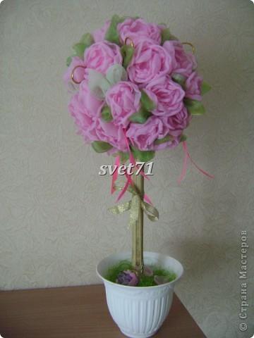 Розовое Европейское дерево фото 1