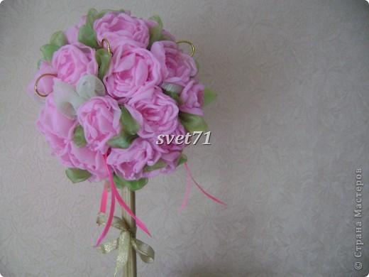 Розовое Европейское дерево фото 2