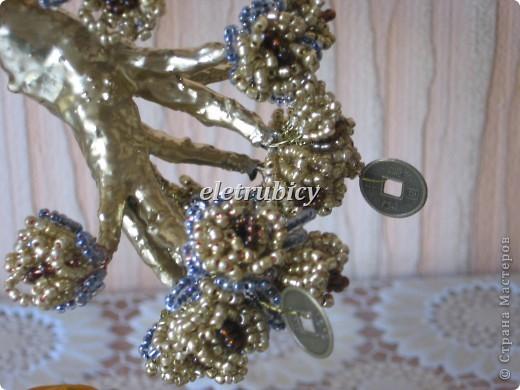 Золотой денежный бонсай фото 5