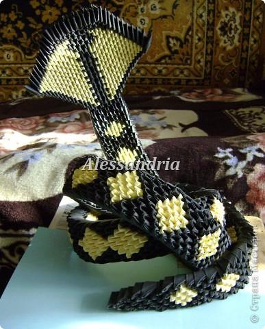 Первая змея комом